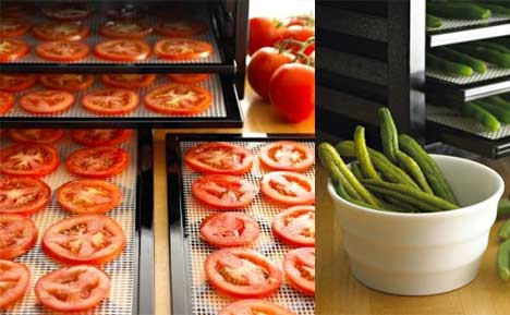 best dehydrator buying guide